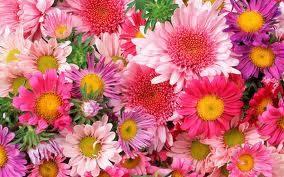 porque se parece a las flores