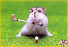 hamster jugando al golf
