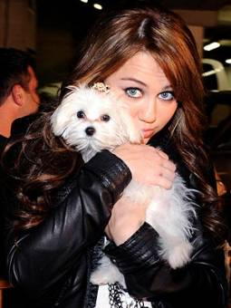 Miley Cyrus Con mascota (Sofie).